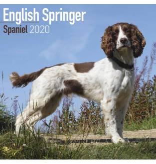 English Springer Spaniel 2020 Square Wall Calendar