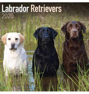 Labrador Retrievers 2020 Square Wall Calendar